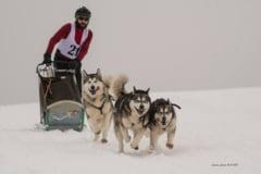 Careianul Daniel Tentis participa la Campionatul Mondial de atelaje trase de caini