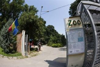 Carnagiu la Zoo Timisoara. Trei caini au ucis toti cangurii de la Gradina Zoologica