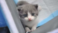 Cat te-ar costa sa iti clonezi pisica? Chinezii tocmai au bifat o astfel de reusita