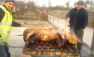 Cati porci au taiat romanii in pandemie. Statistica referitoare exclusiv la suinele sacrificate in gospodariile cetatenilor