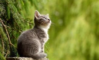 Caz rar in Belgia: O pisica are coronavirus