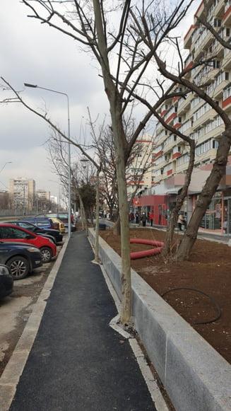 Cazul copacilor incastrati in borduri din Sectorul 4 al Capitalei: Primaria a gasit solutia - taierea! (Galerie foto)