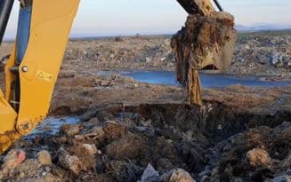 Cazul oilor inecate in Portul Midia: Panza freatica din comuna Smardan ar putea fi contaminata de lesurile a mii de animale ingropate