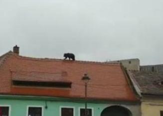Cazul ursului ucis la Sibiu: Ciolos vrea rapoarte complete pana luni