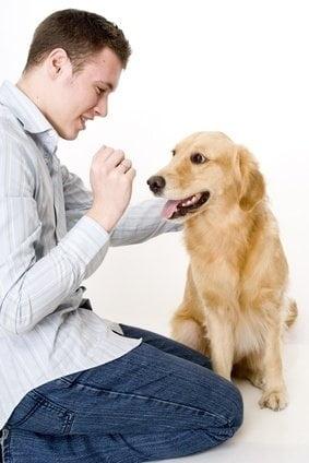 Ce boli pot detecta cainii?
