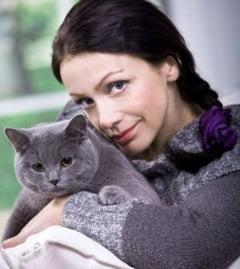 Ce boli poti lua de la pisici - Ce spune veterinarul