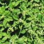 Ce e bine sa stii despre plantele aromatice