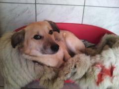 Ce face PETA cu hainele de blana: Asternut pentru maidanezii de la Craiova