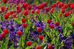Ce flori se pot planta toamna in gradina