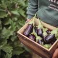 Ce produse trebuie să folosești pentru a te bucura de o recoltă bogată?