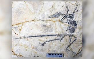 Ce s-a gasit in burta unui dinozaur de acum 120 de milioane de ani