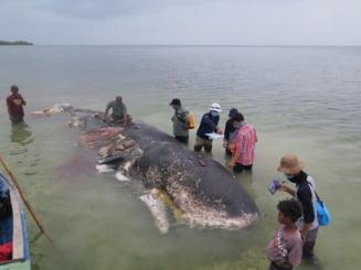 Ce s-a gasit in stomacul unei balene ar trebui sa ne puna serios pe ganduri
