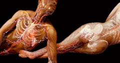 Ce se intampla cu organismul tau pe durata unei zile