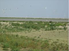 Ce specii de pasari au reaparut in Romania in ultimii ani si care e cea mai salbatica zona din tara Interviu