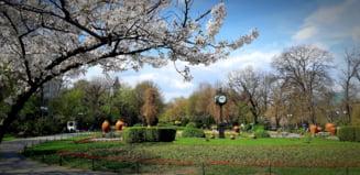 """Ce vrea sa faca Firea in Cismigiu: O """"autostrada de pietris"""" ar putea spinteca cel mai vechi parc din Bucuresti"""