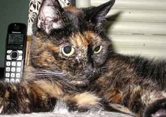 Cea mai batrana pisica din lume a murit - cati ani avea si cum arata (Foto)