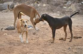 Cea mai mare organizatie de protectie a animalelor: Eutanasia, cea mai buna optiune