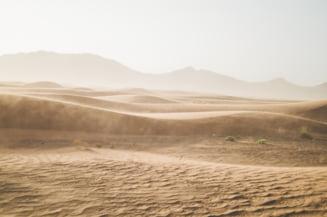 Cea mai rapida furnica din lume atinge de 108 ori lungimea ei corporala pe secunda (Foto)