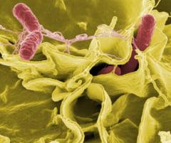 Cea mai simpla cale de a lupta cu bacteriile din bucatarie
