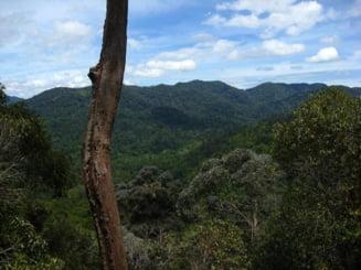 Cea mai veche padure tropicala din lume (Galerie foto)