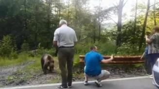 Cei care hranesc ursul la marginea drumului trebuie sanctionati, a spus Ministrul Mediului la Brasov