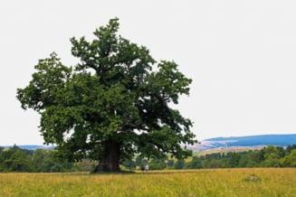 Cel mai batran copac din Romania, Fantana sarata pentru muraturi si cel mai tanar vulcan - Traseul turistic cu de toate Interviu