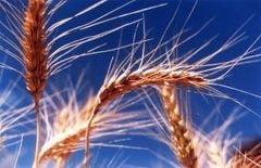Cel mai bun an agricol doar in vorbe - Romania a facut importuri record in 2011
