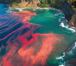 Cele mai ciudate fenomene naturale din lume (Galerie foto)