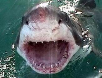 Cele mai grave zece atacuri ale rechinilor