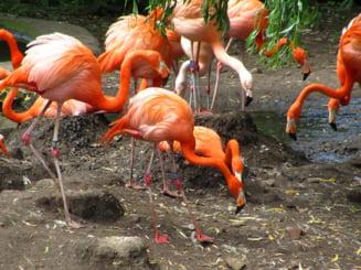Cele mai neobisnuite gradini zoologice din lume (Galerie foto)