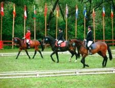 Cele mai potrivite locuri pentru calarie: Admira frumusetea cailor, la Sighisoara