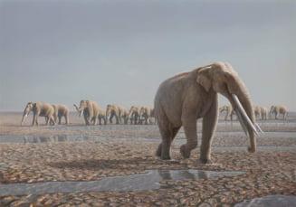 Cele mai vechi urme ale unor elefanti