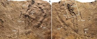 Cele mai vechi urme lasate de un animal au fost descoperite in China