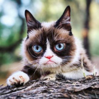 Celebra Grumpy Cat a murit
