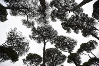 Cercetatorii au descoperit care e cel mai bun copac pentru combaterea poluarii fonice
