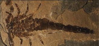 """Cercetatorii din Canada au facut o """"descoperire extraordinara"""" dupa 433 de milioane de ani"""