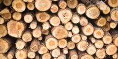 Cerere foarte mica din partea populatiei pentru lemnul de foc comercializat de Directia Silvica in zona de nord a judetului