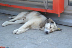 Cersitul cu animale de companie, interzis in Rusia
