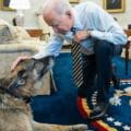 Champ, unul din cainii cuplului Biden, a murit. Mesajul presedintelui american