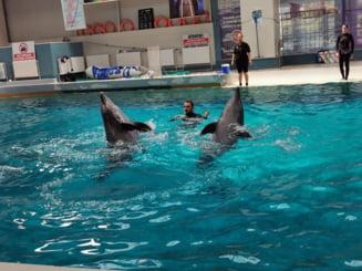 Chan Chan, unul dintre delfinii de la Constanța, este bolnav. Spectacolele de la Delfinariu au fost suspendate