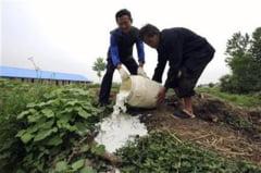 China: 96 de persoane arestate pentru contaminarea laptelui cu melamina