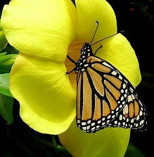 Cinci flori care-ti aduc fluturi in gradina
