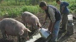 Cinci forme de ajutor financiar pentru fermieri