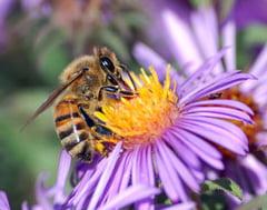 Cinci oameni, atacati de albine in Prahova. Doi dintre ei, in soc anafilactic