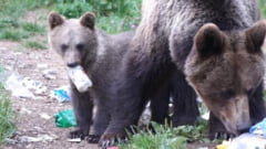 Clementa pentru ursii gunoieri