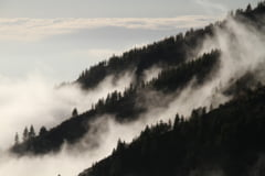 Cod galben de ceata densa si ghetus in 16 judete