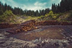 Codul silvic se schimba din cauza celor care fura lemn cu caruta