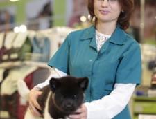 Coltul animalelor: Cum sa-ti transporti in siguranta prietenii necuvantatori