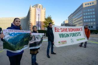 Comisia Europeana, somata sa salveze padurile Romaniei: Guvernul minte! Paduri unice sunt victime ale coruptiei (Foto)