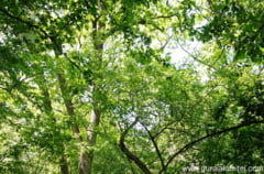 Compensatii financiare pentru proprietarii de padure din zonele protejate